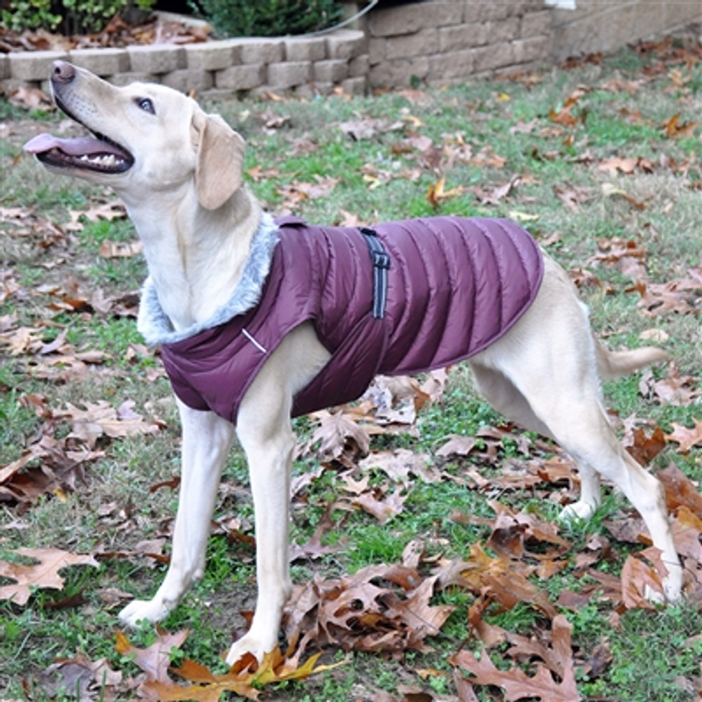 purple puffer dog coat