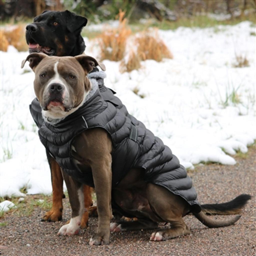 black puffer dog coat