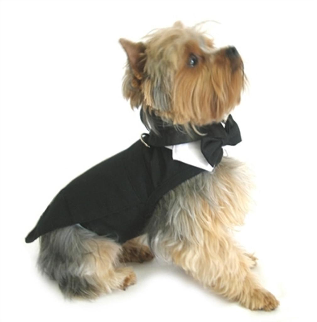 tuxedo for dogs