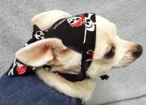 Pirate Skull Dog Doo Rag