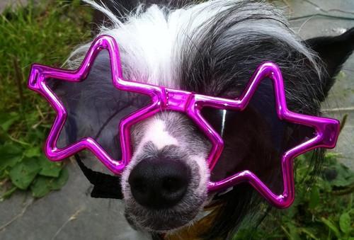 Dog Sunglasses   Star Shaped Dog Sunglasses