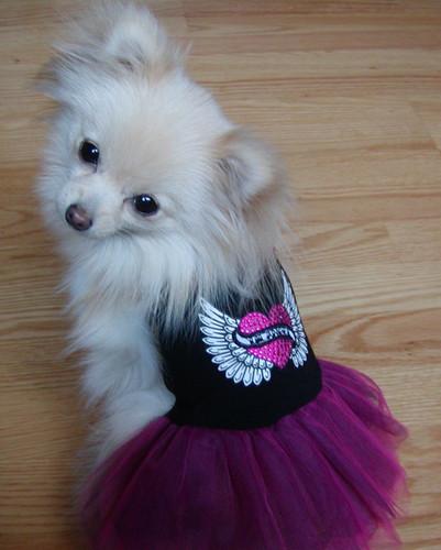 Rocker Tulle Dog Dress