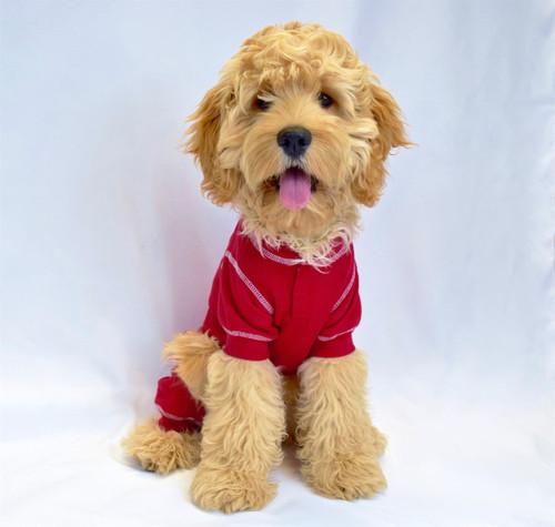 Thermal Dog Pajamas