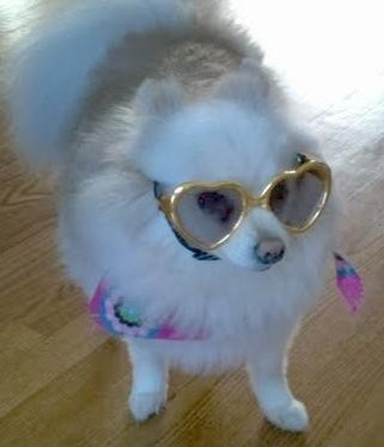 Dog Sunglasses | Sunglasses for Dogs