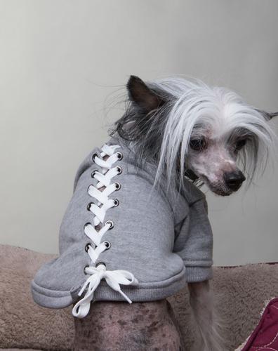 grey lace-up dog sweatshirt