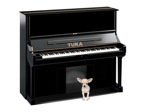 Piano Dog Hosue