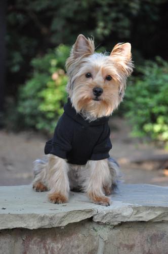 black dog hoodie