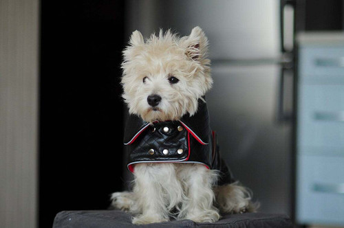 Quilted Faux Leather Dog Jacket - Black