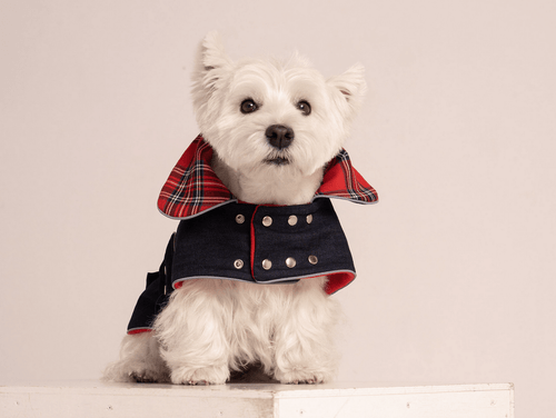 Denim Dog Jacket with cozy fleece lining
