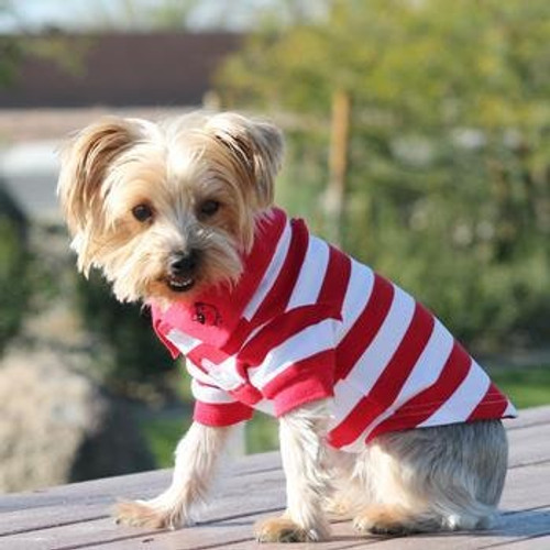 Little dog wearing striped dog polo shirt - Flame Scarlet Red and White