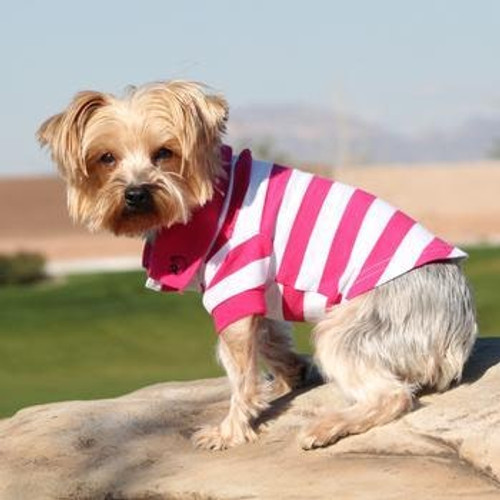Little dog wearing Dog Polo Shirt - Pink Yarrow and White