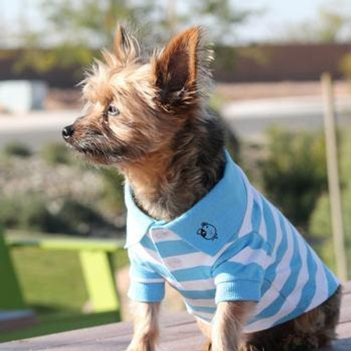 Little Dog Wearing Dog Polo Shirt - Blue Niagara and White