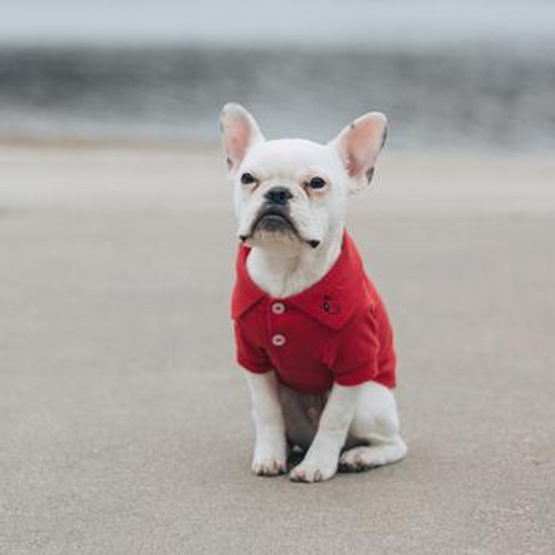 Little dog wearing Dog Polo Shirt - Flame Scarlet Red