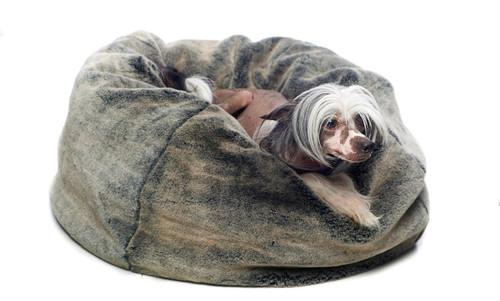 Faux Fur Bean Bag Style Dog Bed