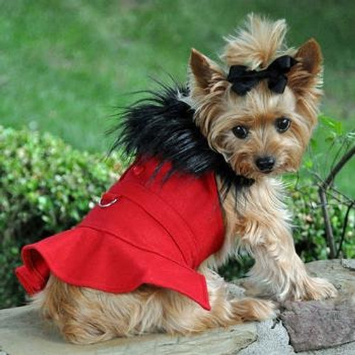 Little Dog Wearing Dog Harness Coat - Wool Fur-Trimmed in Red