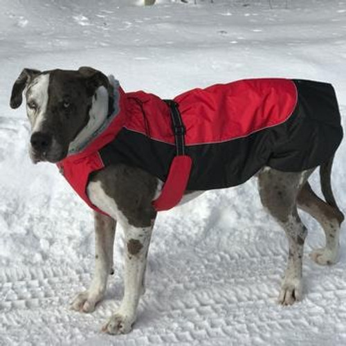 Dog Coat - Alpine All-Weather - Red and Black