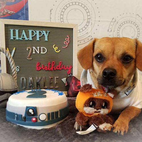 Dog Birthday Cake - Star Wars