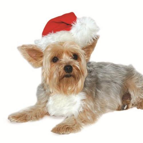 Dog Hat - Santa