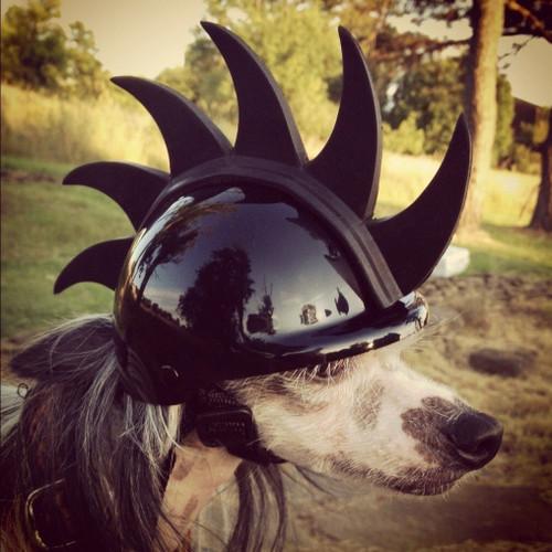 Mohawk Dog Helmet