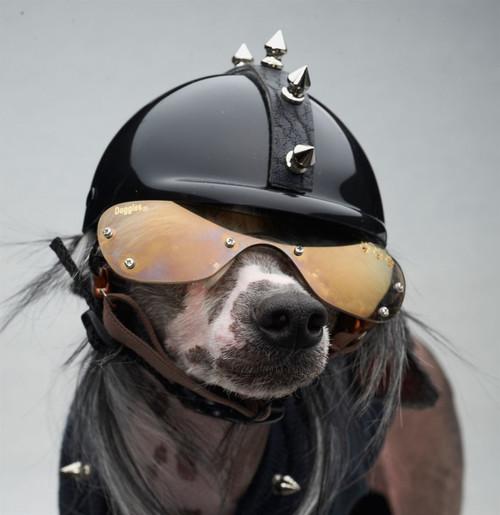 Spiked Dog Helmet
