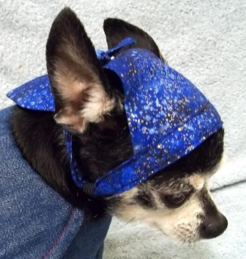 Blue Galaxy Dog Doo Rag