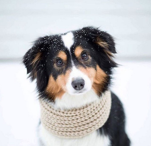 Designer Dog Accessories