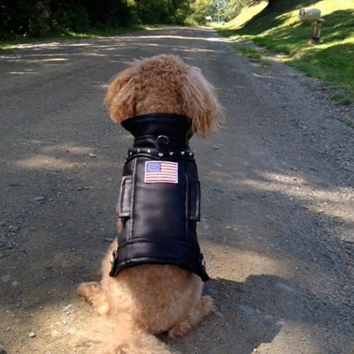 Dog Jacket | USA Faux Leather Biker Dog Jacket