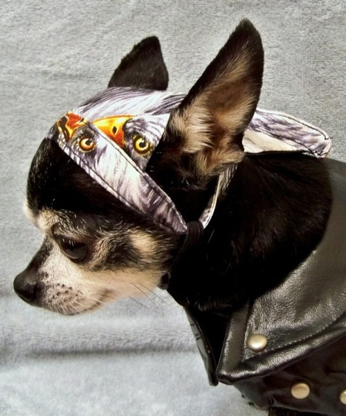 Eagle Doo Rag for Dogs