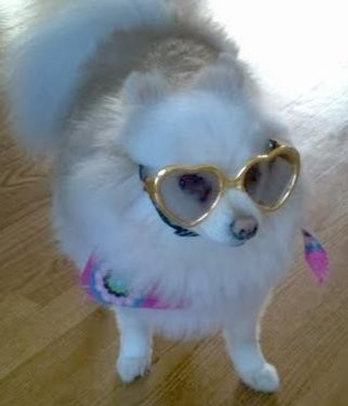 Dog Sunglasses | Sunglasses for Dogs
