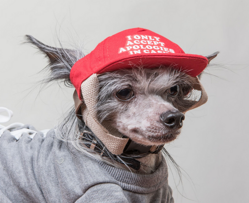 i only accept apologies in cash dog hat