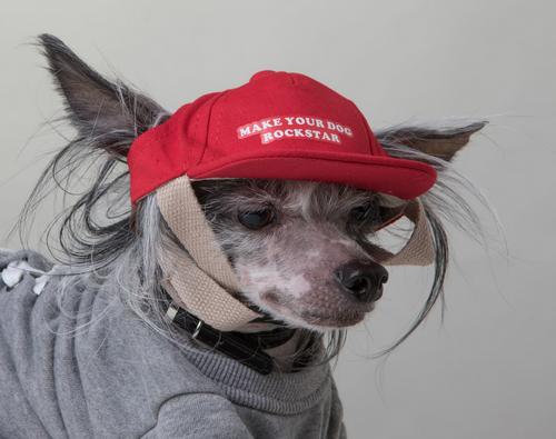 make your dog rockstar dog hat