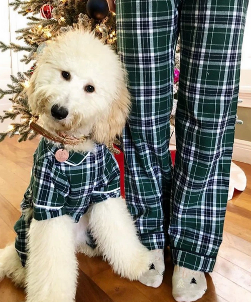 matching set of human and dog pajamas