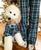 matching set of human and dog pajamas