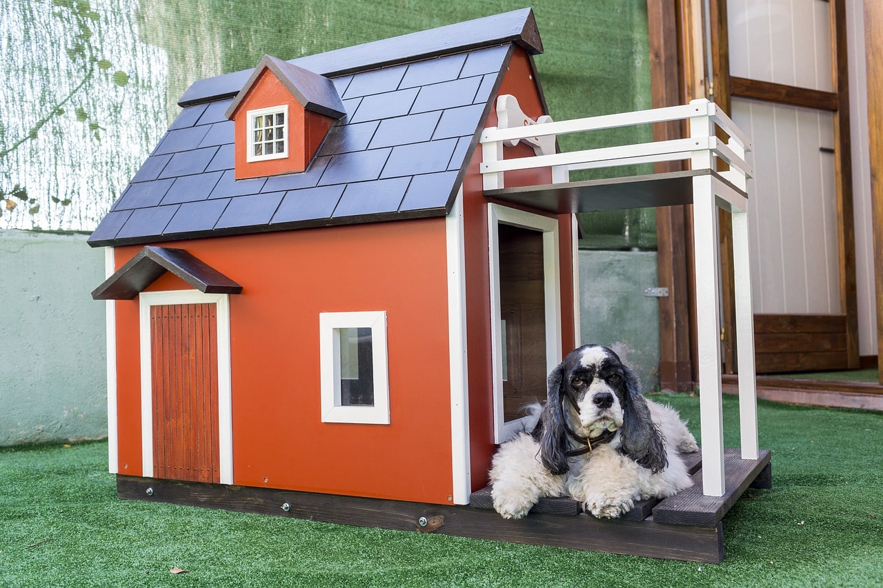 Dog looking at the camera asking for dog house