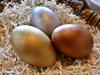Egg of Creation - Women's Mysteries Rattle - Emu Egg - Gold