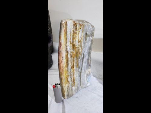 Polished Petrified Wood Free Form