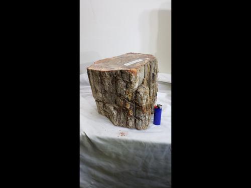 Giant Petrified Wood Log / Stump - Polished Top