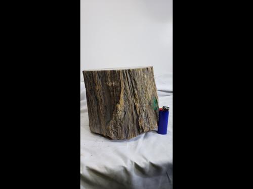 Large Petrified Wood Stump / Log  - Polished Top