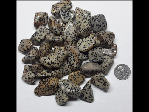 Dalmation Jasper - Tumbled Stone - by the pound