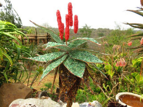 Polished Hand Made Gemstone Tree - Aloe - From South Africa