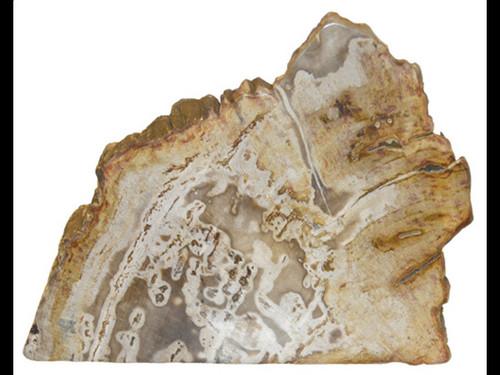 Petrified Wood Slice with Cut Base -