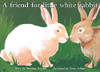 PM Library Yellow A friend for Little White Rabbit Lvl 8