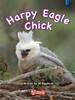 Key Links Literacy Blue Harpy Eagle Chick