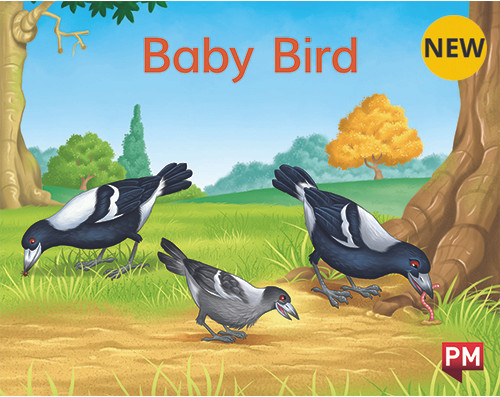 PM Library Magenta Baby Bird 2-3 (B-C) 6-Pack