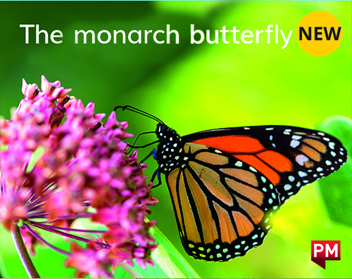 PM Library Magenta Level 1 The Monarch Butterfly (wordless) 6-pack